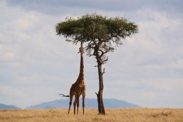 jak przygotować się do wakacji w kenii
